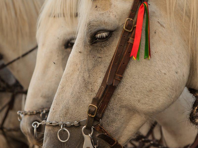 Feria, Tarifa in Spain, horseriding