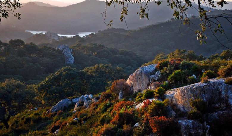 Parque Natural Los Alcornocales Tarifa, spain
