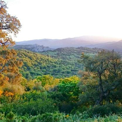 Hiking In The Parque Natural Los Alcornocales Tarifa, Spain
