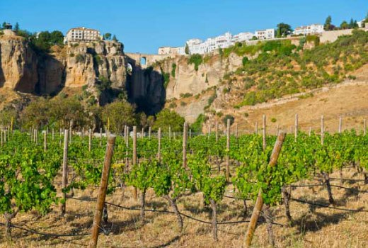 Wine Tour in the Bodegas of Ronda