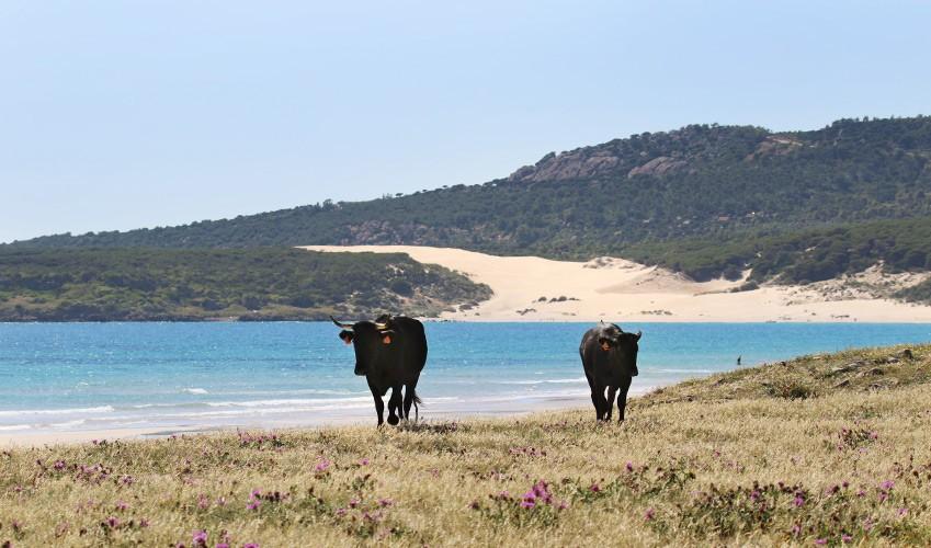 Tarifa pour ses belles plages nature