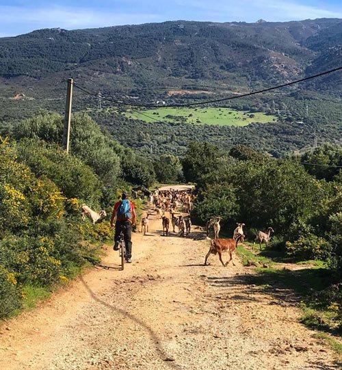 Balade en VTT dans les parcs naturels de Tarifa