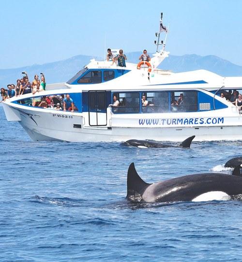 Observation des baleines Tarifa